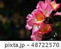 バラ 薔薇 花の写真 48722570