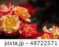 バラ 薔薇 花の写真 48722571