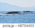 養殖海苔の摘み取り風景 明石市沖の播磨灘で操業 48734453