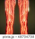 48734738