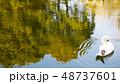 水辺の白鳥 リラックスコハクチョウ ナチュラル 演奏 湖  自然 ポスター ハガキ 案内 状 公演 48737601