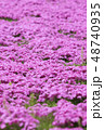 芝桜 花 ピンクの写真 48740935