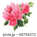 花 薔薇 水彩のイラスト 48756372
