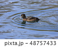 鳥 池 水鳥の写真 48757433