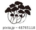 しめじ 水彩画 茸のイラスト 48765118