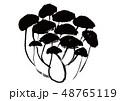 しめじ 水彩画 茸のイラスト 48765119