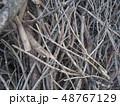 Dry tree branch background. 48767129