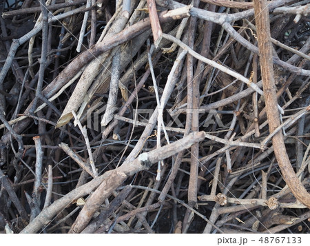 Firewood texture background. 48767133