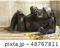 チンパンジー リラックス 48767811