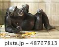 チンパンジー リラックス 48767813