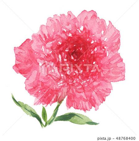 carnation19312oix7 48768400