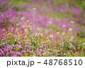 自然の花畑 48768510