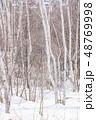 冬 森林 枯れ木の写真 48769998