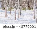 冬 森林 枯れ木の写真 48770001