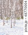 冬 森林 枯れ木の写真 48770004