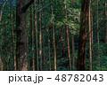 木漏れ日の森 48782043