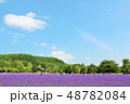 北海道 夏の青空とラベンダー畑 48782084