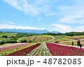 北海道 夏の青空と広大な花畑の風景 48782085