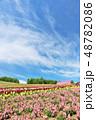 北海道 夏の青空と広大な花畑の風景 48782086