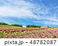 北海道 夏の青空と広大な花畑の風景 48782087