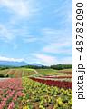 北海道 夏の青空と広大な花畑の風景 48782090