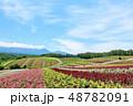 北海道 夏の青空と広大な花畑の風景 48782091