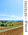 北海道 夏の青空と広大な花畑の風景 48782092