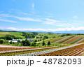 北海道 夏の青空と広大な花畑の風景 48782093