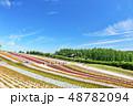 北海道 夏の青空と広大な花畑の風景 48782094