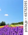北海道 夏の青空と彩りの花畑 48782095