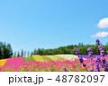 北海道 夏の青空 彩りの花畑とラベンダー 48782097