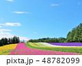 北海道 夏の青空と彩りの花畑 48782099