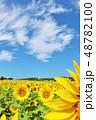 北海道 夏の青空とひまわり 48782100