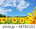 北海道 夏の青空とひまわり 48782101