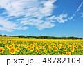 北海道 夏の青空とひまわり 48782103