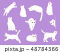 猫のイラストセット 48784366