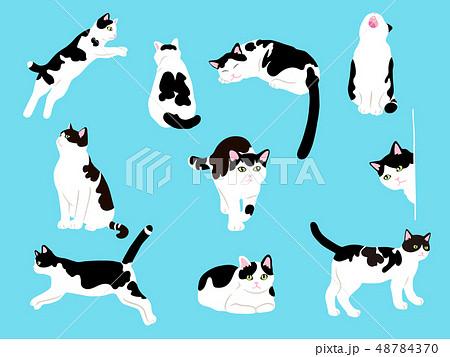 猫のイラストセット 48784370
