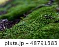 苔から生えた新芽 48791383