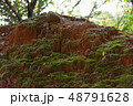 苔の生えた土 48791628