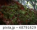 苔の生えた土 48791629