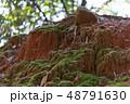 苔の生えた土 48791630