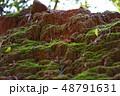 苔の生えた土 48791631