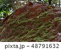 苔の生えた土 48791632