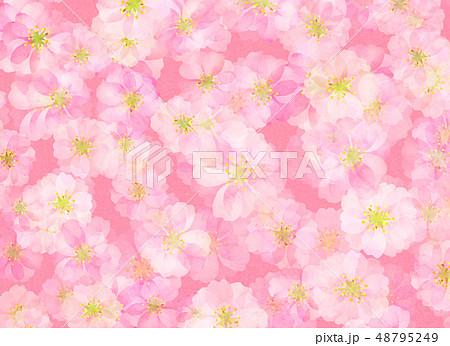 八重桜 梅 水彩風 テクスチャー 48795249