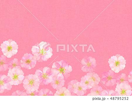 八重桜 梅 水彩風 テクスチャー 48795252