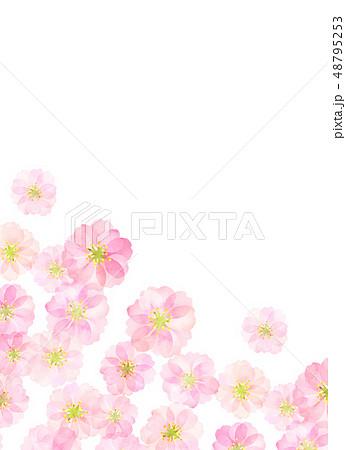 八重桜 梅 水彩風 テクスチャー 48795253