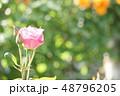 薔薇 バラ 花の写真 48796205