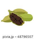 香辛料のイラスト。チャイにも使われるカルダモン。 48796507