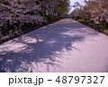 青森 弘前城の花筏 お濠に浮かんだ桜の花びら 48797327