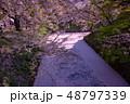 青森 弘前城の花筏 お濠に浮かんだ桜の花びら 48797339